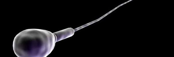 La producción de esperma