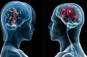 Sexo y cerebro