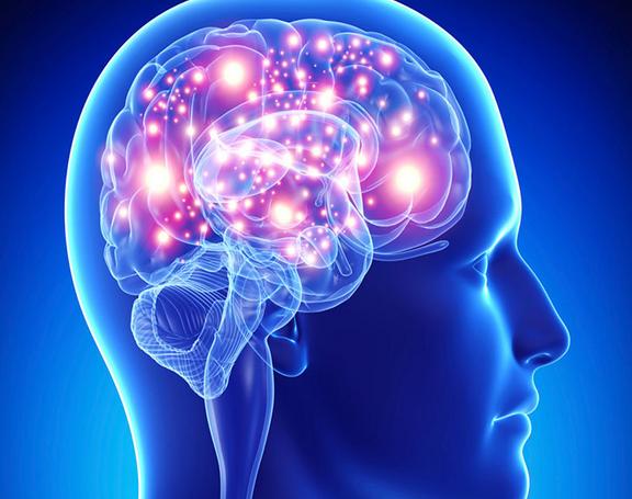 El cerebro y sexualidad