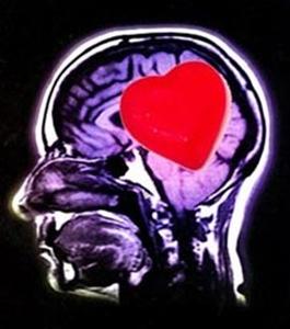 El cerebro y la sexualidad IV
