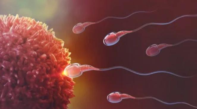 La posición sexual y el sexo del bebé